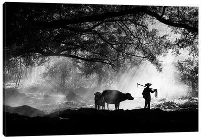 Chinese Farmer And Buffalo Canvas Art Print