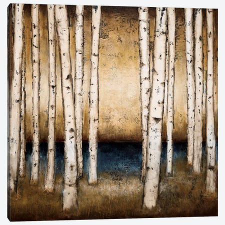 Birch Landing Canvas Print #PSG6} by Patrick St. Germain Canvas Art Print