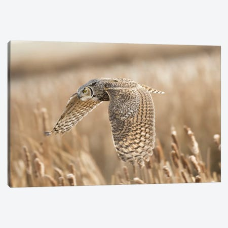 Great Horned Owl Canvas Print #PSH4} by Peter Stahl Canvas Artwork