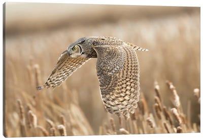 Great Horned Owl Canvas Art Print