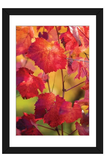 Light In The Vine Leaves Framed Art Print