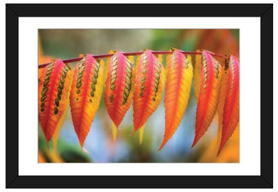 Like A Lizard Skin Framed Art Print
