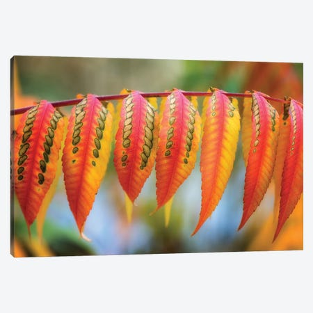 Like A Lizard Skin Canvas Print #PSL102} by Philippe Sainte-Laudy Canvas Print