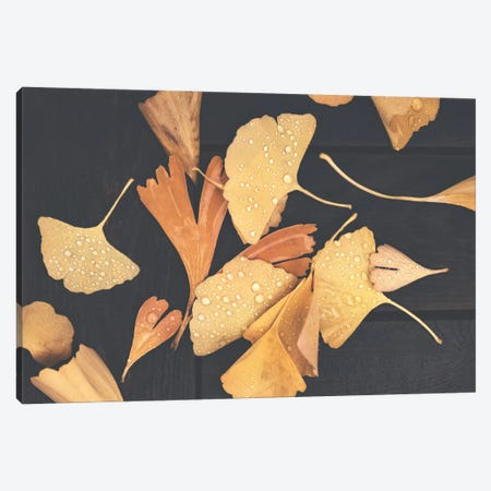 After Fall Canvas Print #PSL10} by Philippe Sainte-Laudy Canvas Print