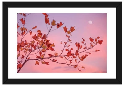 Moon Rose Framed Art Print