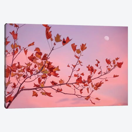 Moon Rose Canvas Print #PSL111} by Philippe Sainte-Laudy Canvas Wall Art