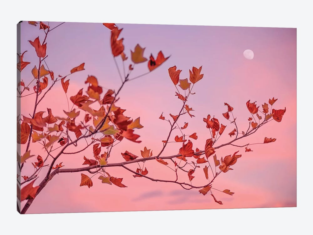 Moon Rose by Philippe Sainte-Laudy 1-piece Canvas Art