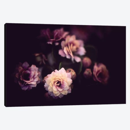 Morning Discovery Canvas Print #PSL112} by Philippe Sainte-Laudy Canvas Art