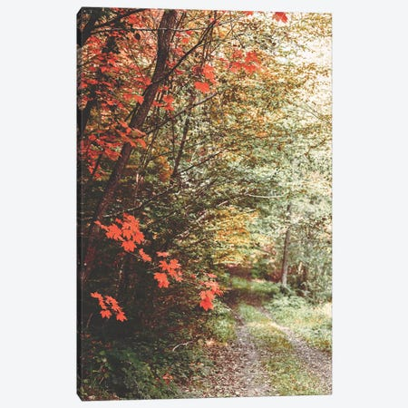 Morning Palette Canvas Print #PSL113} by Philippe Sainte-Laudy Canvas Art