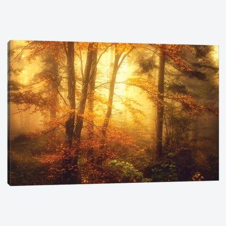 Mystic Fog Canvas Print #PSL116} by Philippe Sainte-Laudy Art Print
