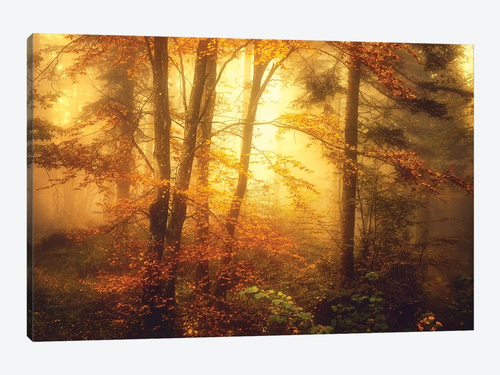 Mystic Fog by Philippe Sainte-Laudy 1-piece Art Print