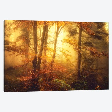 Mystic Fog Canvas Print #PSL116} by Philippe Sainte-Laudy Art Print