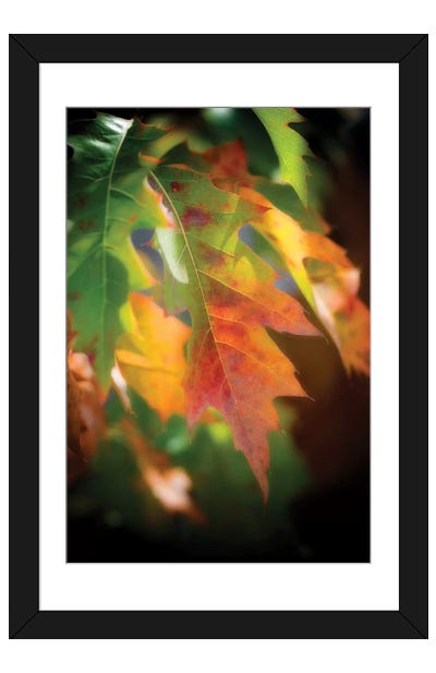Oak Leaves Framed Art Print