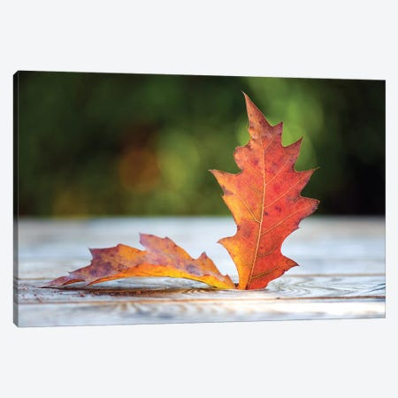 October Atmosphere Canvas Print #PSL122} by Philippe Sainte-Laudy Canvas Print