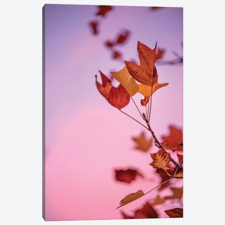 Pink Atmosphere Canvas Print #PSL128} by Philippe Sainte-Laudy Canvas Art Print