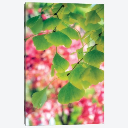 Rain Of Leaves Canvas Print #PSL133} by Philippe Sainte-Laudy Canvas Art