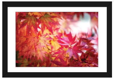 Red And Yellow Leaves Framed Art Print