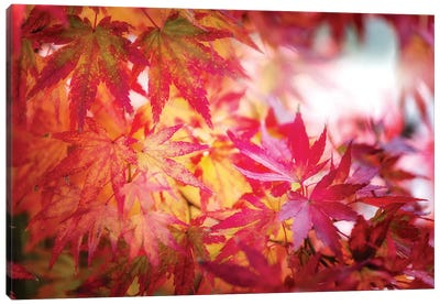Red And Yellow Leaves Canvas Art Print