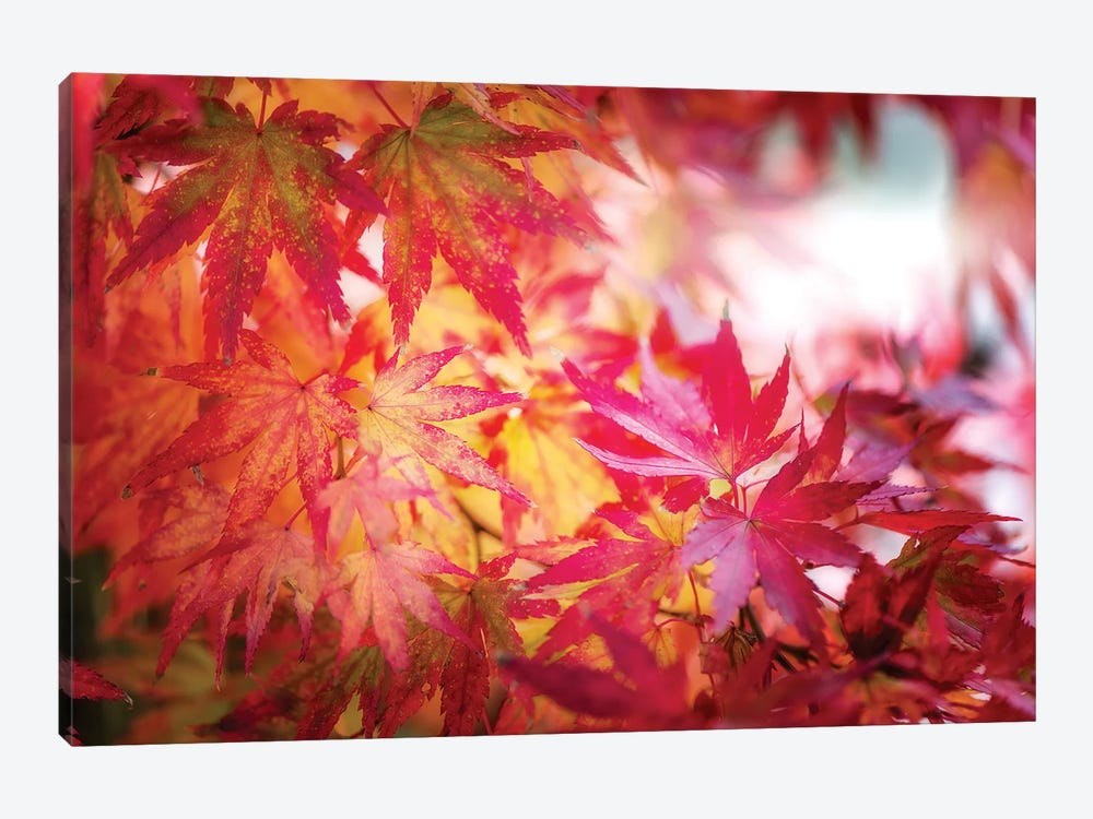 Red And Yellow Leaves by Philippe Sainte-Laudy 1-piece Canvas Art