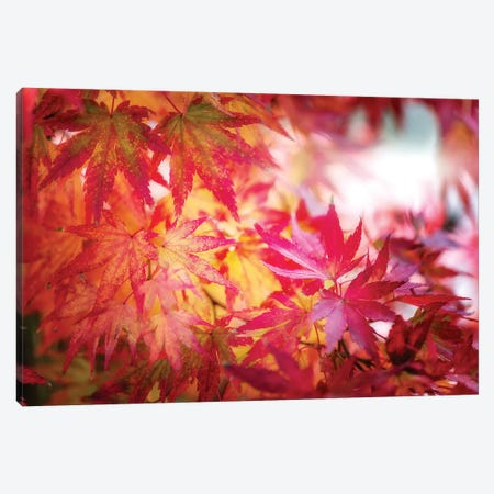 Red And Yellow Leaves 3-Piece Canvas #PSL135} by Philippe Sainte-Laudy Canvas Art Print