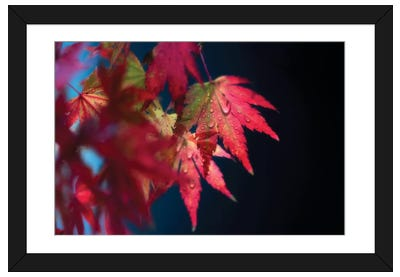 Red Fragile Framed Art Print