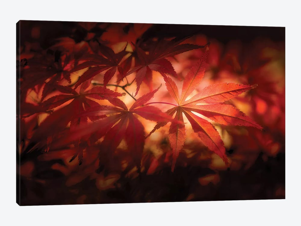 Red Light by Philippe Sainte-Laudy 1-piece Canvas Print
