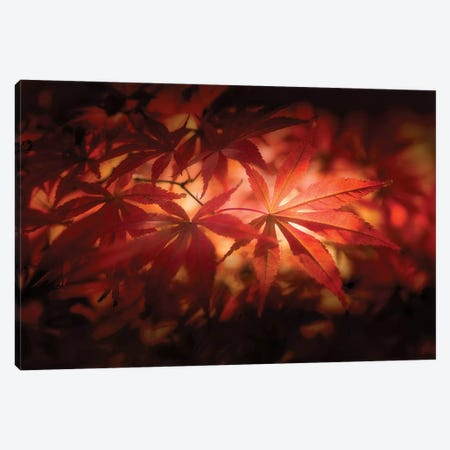 Red Light Canvas Print #PSL138} by Philippe Sainte-Laudy Canvas Art