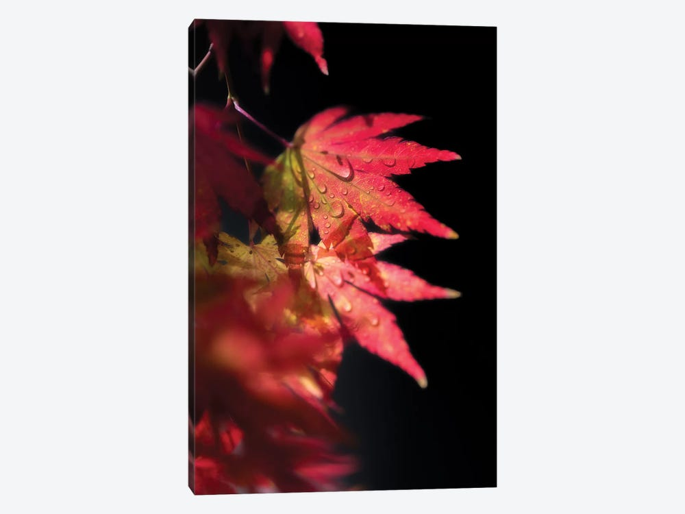 Red Spirit Of Autumn by Philippe Sainte-Laudy 1-piece Canvas Wall Art