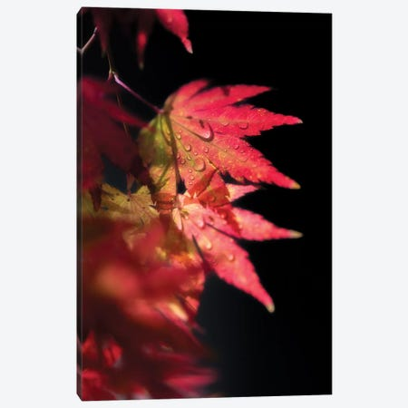 Red Spirit Of Autumn Canvas Print #PSL139} by Philippe Sainte-Laudy Canvas Wall Art