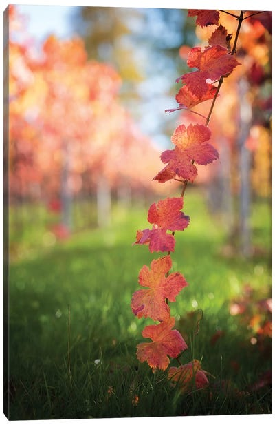 Red Vine Leaves Canvas Art Print