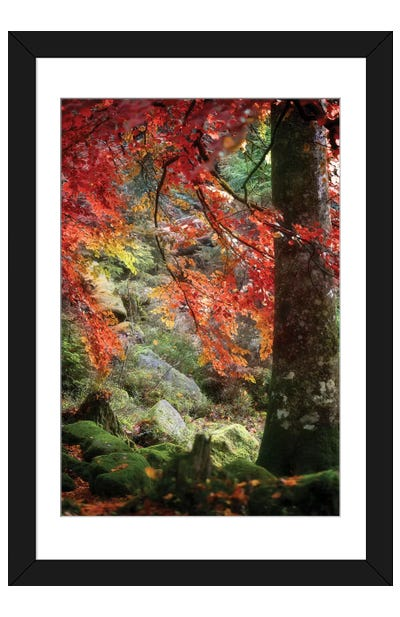Rock Garden Framed Art Print