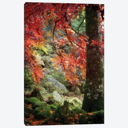 Rock Garden Canvas Print #PSL143} by Philippe Sainte-Laudy Canvas Art Print