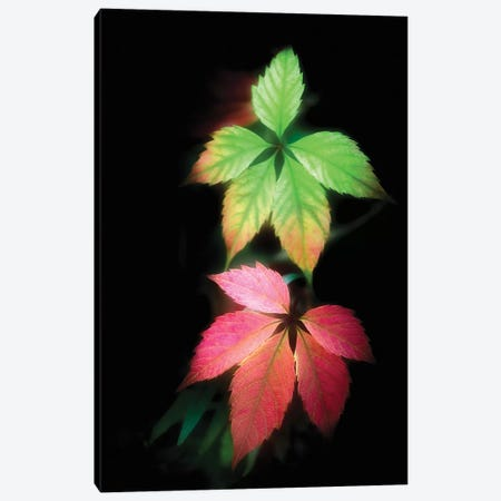 Secret Autumn Canvas Print #PSL145} by Philippe Sainte-Laudy Canvas Artwork