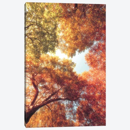 Shades Of Red Canvas Print #PSL147} by Philippe Sainte-Laudy Canvas Art