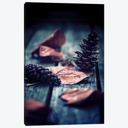 Shed A Light Canvas Print #PSL148} by Philippe Sainte-Laudy Canvas Print
