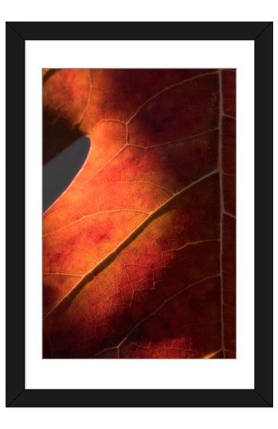 Autumn In Detail Framed Art Print