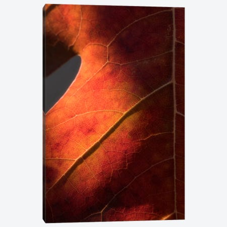Autumn In Detail Canvas Print #PSL14} by Philippe Sainte-Laudy Canvas Art