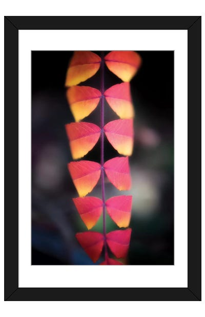 Strip Of Leaves Framed Art Print