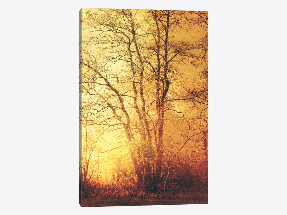 Suddenly Fall by Philippe Sainte-Laudy 1-piece Canvas Art Print