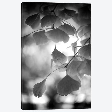 Sweetness Black Canvas Print #PSL157} by Philippe Sainte-Laudy Canvas Art Print