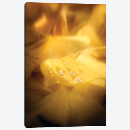 Tears Of Happiness Canvas Print #PSL158} by Philippe Sainte-Laudy Canvas Wall Art