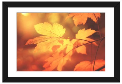 Autumn Leaves Have Arrived Framed Art Print