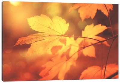 Autumn Leaves Have Arrived Canvas Art Print