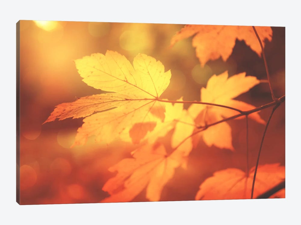 Autumn Leaves Have Arrived by Philippe Sainte-Laudy 1-piece Canvas Artwork