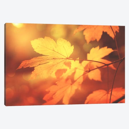 Autumn Leaves Have Arrived Canvas Print #PSL15} by Philippe Sainte-Laudy Canvas Art