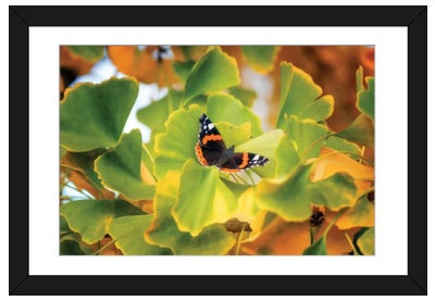 The Butterfly Who Loved Ginkgo Framed Art Print