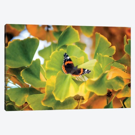 The Butterfly Who Loved Ginkgo Canvas Print #PSL160} by Philippe Sainte-Laudy Canvas Print