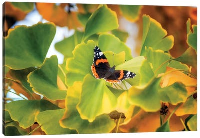 The Butterfly Who Loved Ginkgo Canvas Art Print