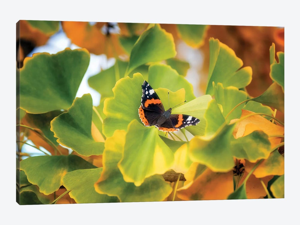 The Butterfly Who Loved Ginkgo by Philippe Sainte-Laudy 1-piece Canvas Wall Art