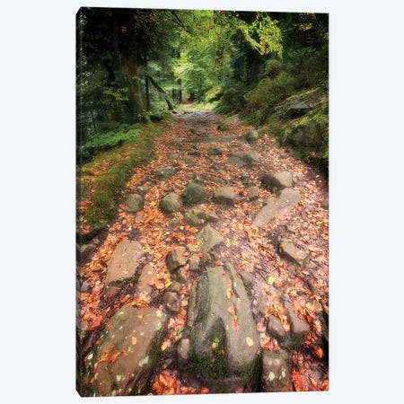 The Forest Way Canvas Print #PSL163} by Philippe Sainte-Laudy Canvas Print